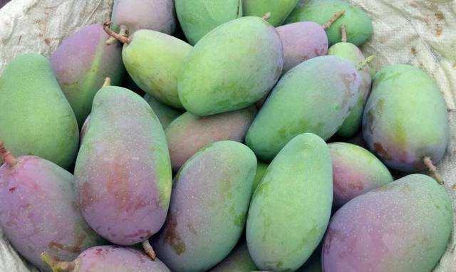 芒果品种,吃了这么多年的芒果,现在我才分清芒果的品种,一起来了解一下吧