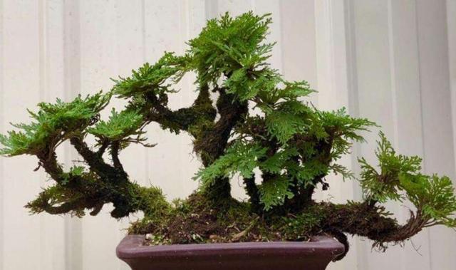野外常见的5种植物,养在花盆里,就是漂亮的小盆栽