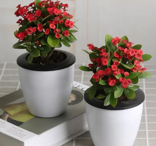 """种红色花卉,红红火火,开得好热闹"""""""