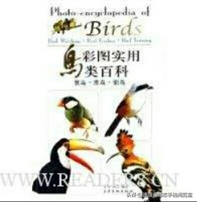 《彩图实用鸟类百科》(多鸟集合介绍)2