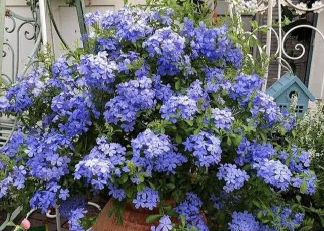 家里养5种花,喜阳光不怕晒,光照越充足开花量越大
