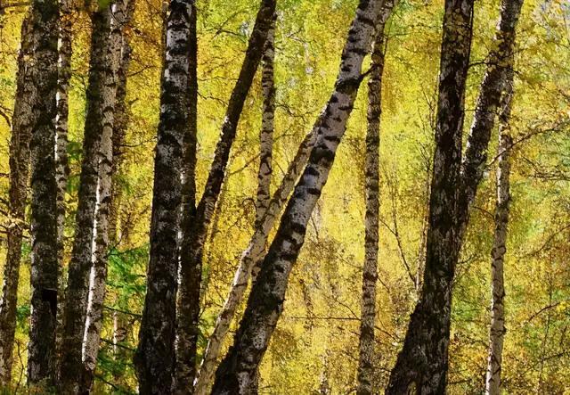 树苗图片,苗木人注意了,这四类苗木常年供不应求