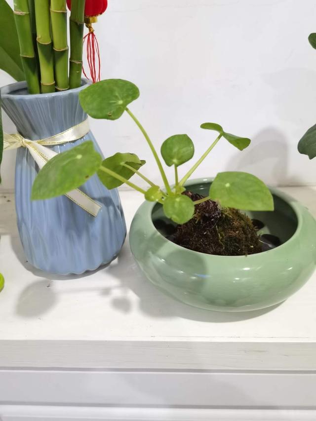 这5种小巧绿植,适合放桌头,迷你又养眼