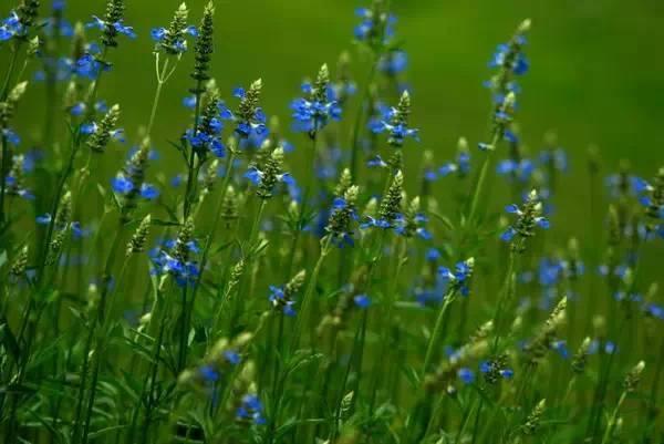夏天开的花有哪些,夏日花园盛开的草本花卉类植物