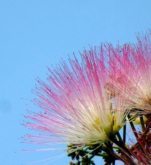 豆科植物有哪些,没想到豆科植物开花会这么美,这种植物还有着夫妻好合的寓意