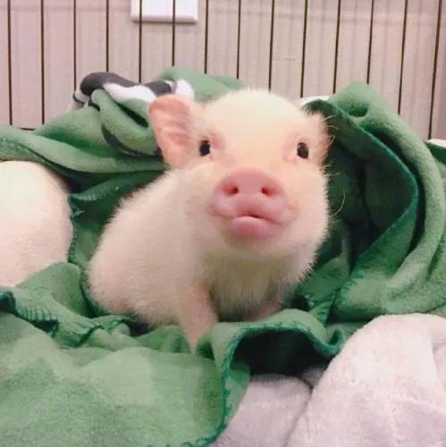 全国今日猪价行情(单位:元/公斤)全国生猪价格今日猪价
