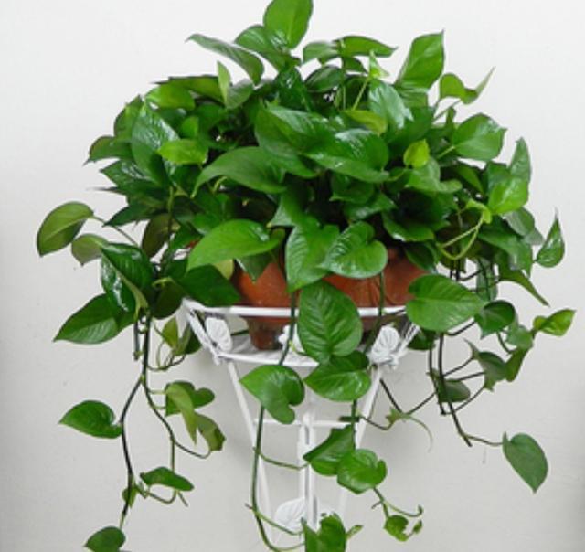 室内净化空气的植物,花友们常选这5种,美观大方