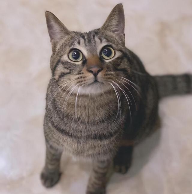 狸花貓被困37天,奇跡生還,被救時只有2斤,它是怎麼活下來的 家有萌寵 第2张