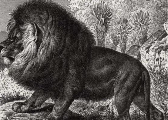 珍稀动物有哪些,已灭绝的17种国宝级动物的最后影像,58人守护最后一头白犀牛