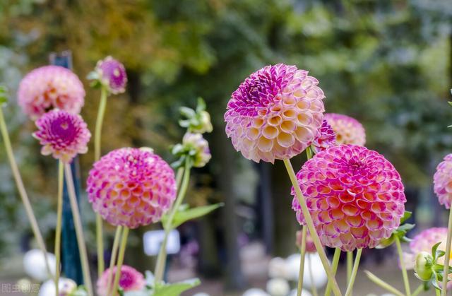 认识50种常见的家居、庭院花卉,花朵美极了!看完就想搬回家