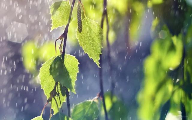 下雨的句子,早安,下雨天的朋友圈文案