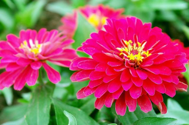 适合庭院种植常见的花卉有哪些?容姐给你推荐10种,看喜欢哪种?