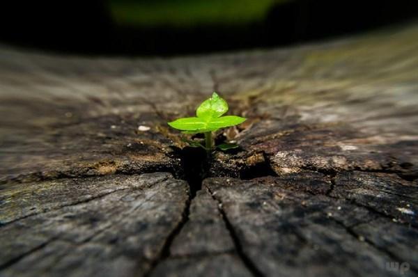 积极向上正能量的句子,积极向上的正能量句子,发朋友圈鼓舞人心!