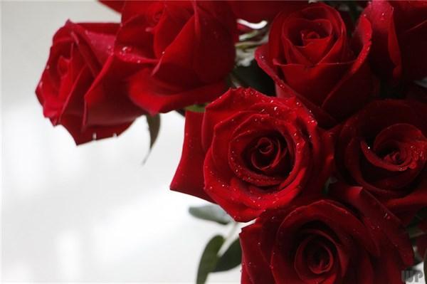 经典的爱情句子,非常经典的句子,爱情,是一个彼此付出的过程,而不是索求的过程
