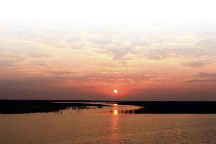 白鹭的诗,当白鹭遇上临江江海湿地,诗句上的美景都在这儿了!