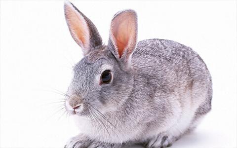 那一年属猪,属兔人1951年出生命运