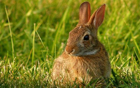 八三年属猪,属兔人1963年出生命运