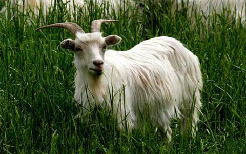 1995属猪的命运,属羊人1955年出生命运