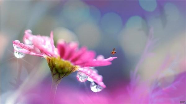 感悟短句,富有哲理的人生感悟短语,唯美有内涵,深入人心