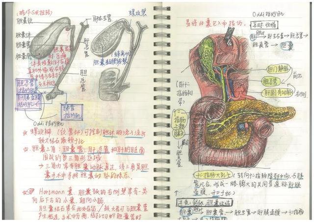 名人的笔记,膜拜!浙大最美笔记出炉,十二指肠和苏州留园都画在笔记里,不服来PK