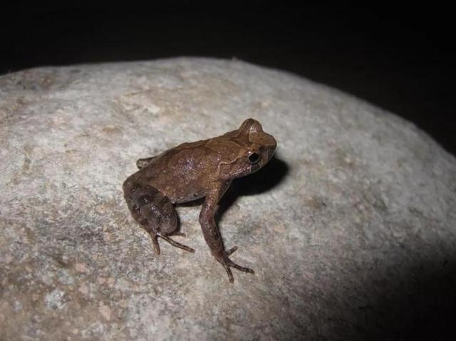重磅!仙居国家公园发现两栖动物新物种 全球新闻风头榜 第1张