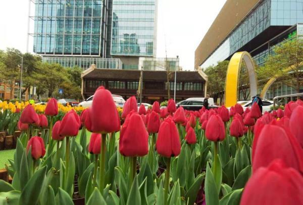 花卉博览会,168万株郁金香来了!上海静安花博会启幕