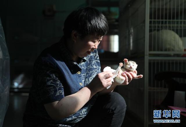 """招财猫图片,农村夫妻的""""招财猫"""""""