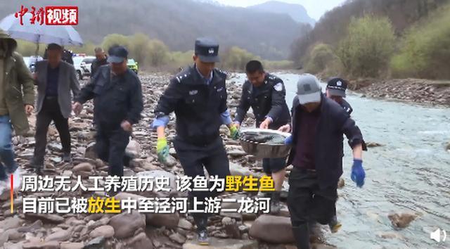 宁夏现1.35米巨型野生娃娃鱼,测算年龄在50岁以上!网友:盆小了…