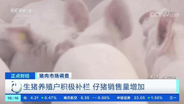 活猪养殖场积极主动加快补栏 猪仔销量提升