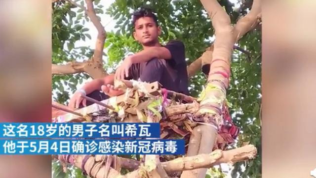 新冠检测呈阳性,印度一男子在树上隔离11天,还并非他一人…… 全球新闻风头榜 第2张