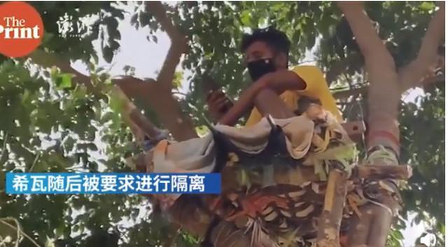 新冠检测呈阳性,印度一男子在树上隔离11天,还并非他一人…… 全球新闻风头榜 第3张