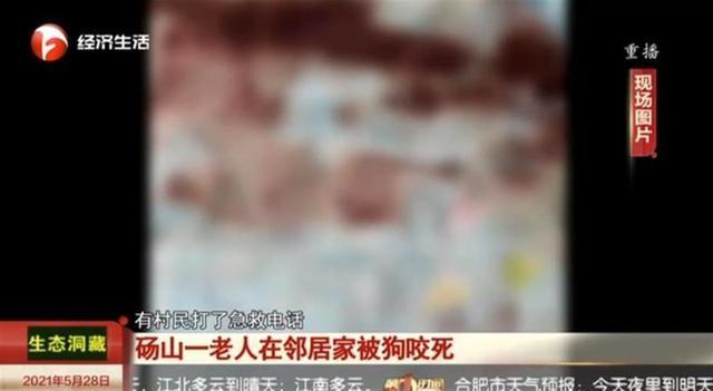 安徽一老人被狗咬死,事后狗上吊自杀?村干部:狗主人自己打死的 全球新闻风头榜 第3张
