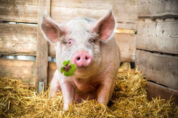 新希望股票,猪肉重回10元时代!新希望股价遭遇腰斩,养猪行业寒冬已至?