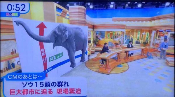 日本媒体花30分钟讲大象北迁 全球新闻风头榜 第2张