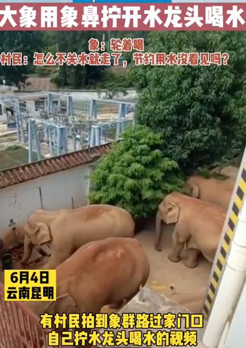 云南象群进村民家,拧开水龙头轮流喝水!村民笑称:咋不关水就走了? 全球新闻风头榜 第1张
