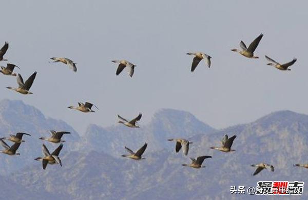 候鸟有哪些,世界十大最美丽的候鸟,蜂鸟是唯一能向后飞行的鸟