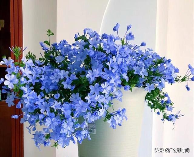 写花的一段话,六种花从春天一直开到冬天,不仅好看还好养,一句话值得