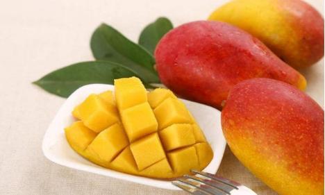 芒果品种,芒果中的巨无霸都在这儿,芒粉看过来,超齐全的芒果品种总结攻略