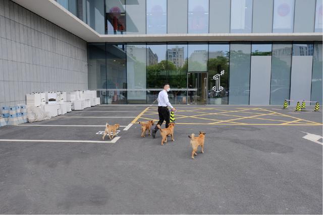 4隻流浪狗入職阿里,如今一年過去了,它們怎麼樣了? 家有萌寵 第3张