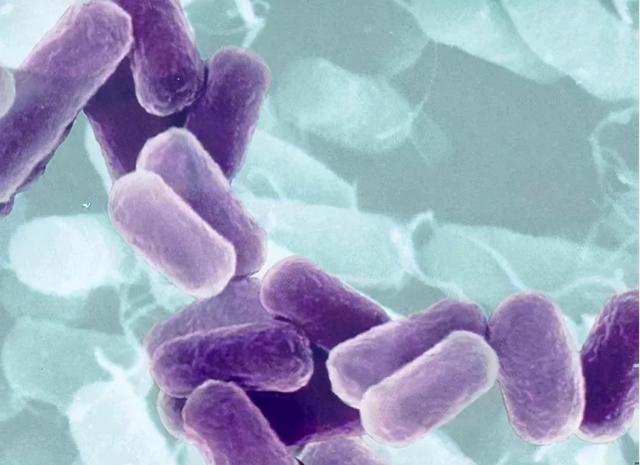 棘皮病,一种罕见的热带传染病,由一种被称为棘皮虫的寄生虫引起