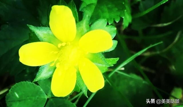 满屋花香的优美短句,千里寻花,满屋芳香