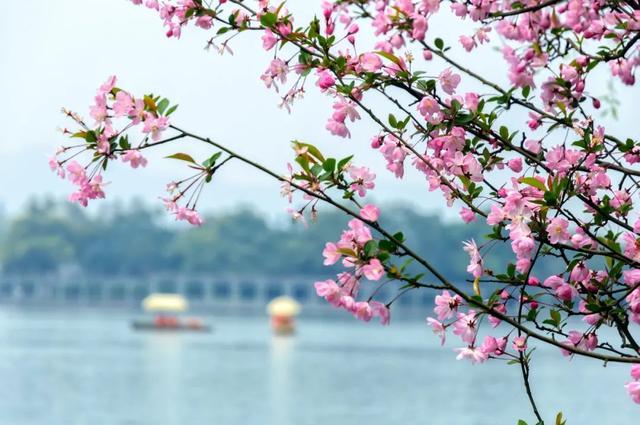 春天的古诗,纳兰容若笔下的春天,酌一壶春酒,感怀一段光阴