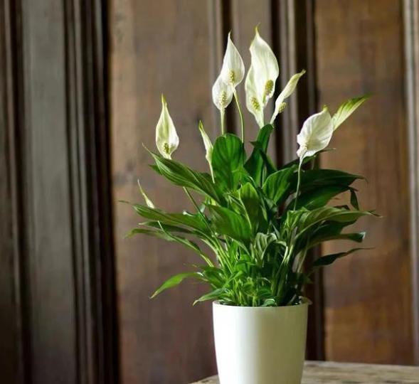 """种耐阴花卉,给点散射光就能开花,你家养了几种?"""""""
