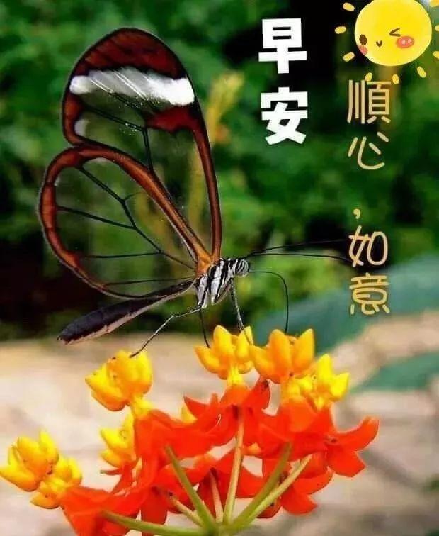 爱的祝福语,心与心,需要温度;爱与爱,要懂呵护,早安