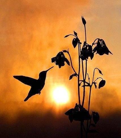 禅语感悟人生的句子,佛言佛语的人生感悟,句句透彻,看懂就是聪明人!