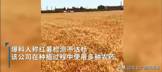 农民网曝河北一公司用40种农药种红薯导致土地绝收,事实如此吗? 全球新闻风头榜 第3张