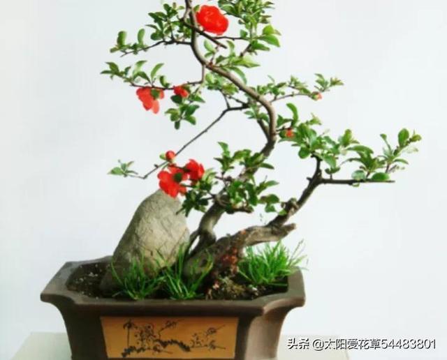 花卉养殖,想把家里的花养护的好,掌握7个好习惯,枝繁叶茂花旺盛
