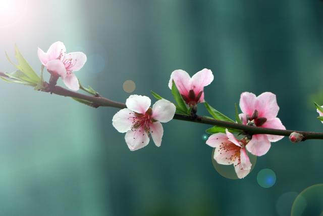 桃花的唯美句子,人间四月天,桃花正在开,关于桃花的古诗词有哪些呢?