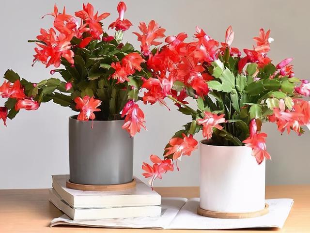 种上这5种漂亮花卉,整个秋冬季都有花赏
