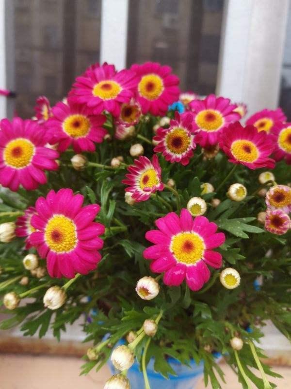 今年超流行小众植物,美而不俗,气质一绝